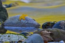 Natur pur & Farbenpracht