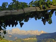 Alto Adige, tutto il buono del vino