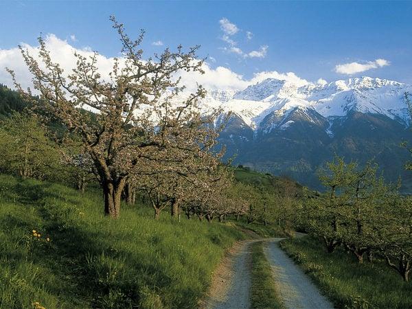 Vinschgau - Staunenswerte Naturwelten