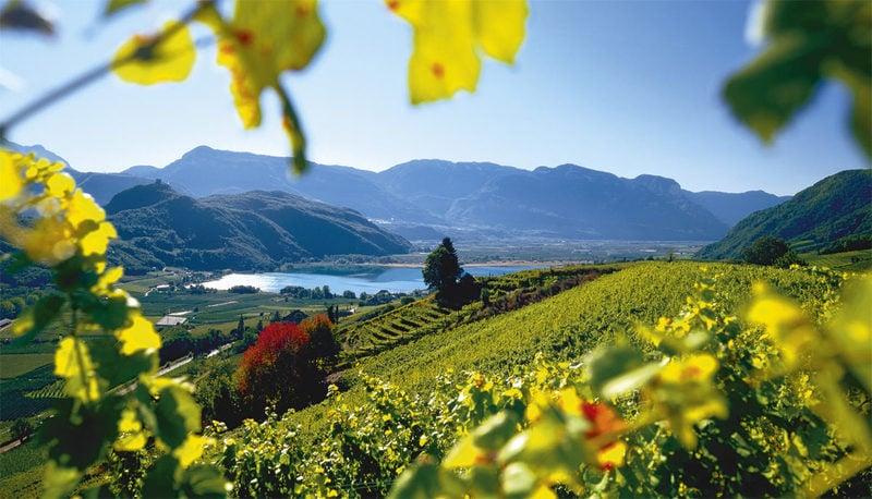 Bolzano, Vigneti e Dolomiti