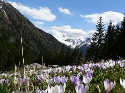 Der Frühling auf den Bergen
