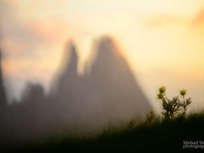 Il risveglio della natura sull'Alpe di Siusi