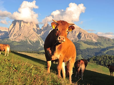 Late summer in the Dolomites