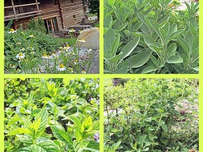 Gassenhofs Kräutergarten im Gratznhäusl in voller Blüte