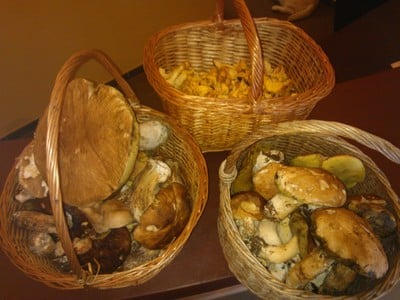 Pilzzeit im Vitalpina Hotel Pfösl