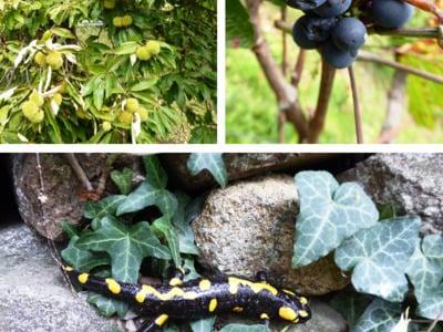 """Salamander, Wein und """"Keschten"""""""