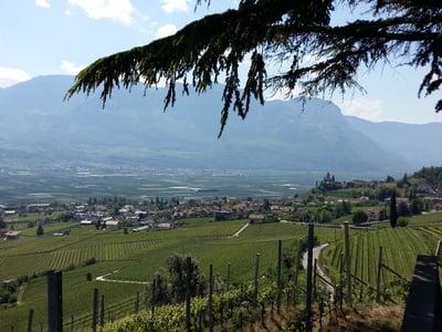 Weinwanderung rund um den Kalterer See