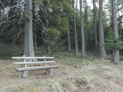 Setz dich hin und dank dem Wald für….