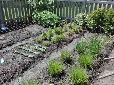 Führung durch unsere Kräutergärten