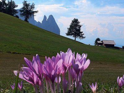 Escursione anulare sull'Alpe di Siusi