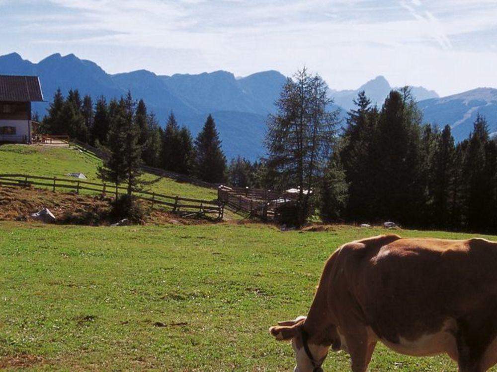 To the Taistner Vorderalm alpine pastures