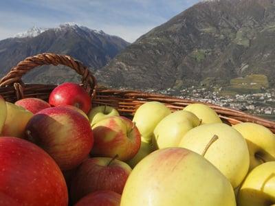 Frische Äpfel vom Golserhof-Garten