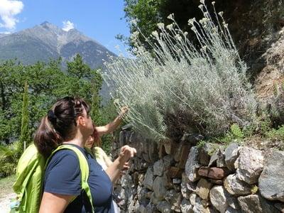 Escursione alle erbe con Margit