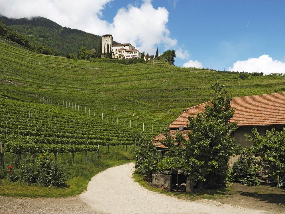 Ambitious vinyard near Merano: The Vineyard Oberstein