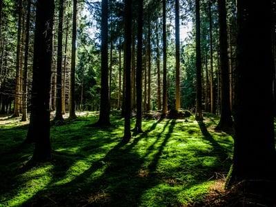 Tief berührt vom Wald.