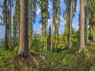 Entdecken Sie, wie loslassen riecht, klingt und duftet… Beim Waldbaden