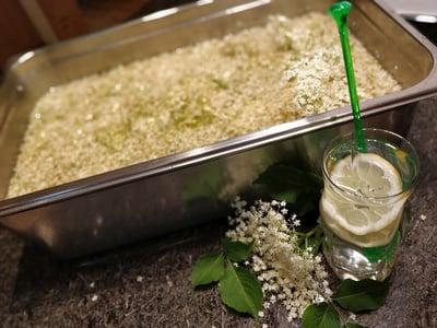 Sciroppo di fiori di sambuco fatto in casa