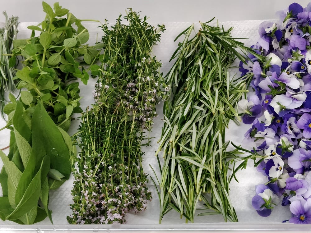 Pure freshness - Herbs from our own herb garden...