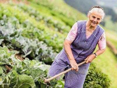 Dal giardino della nonna