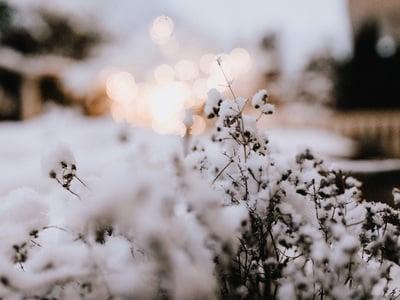 Erbe dal giardino in ibernazione
