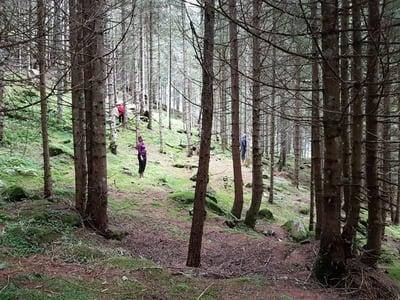 Waldbaden im naturbelassenen Jaufental