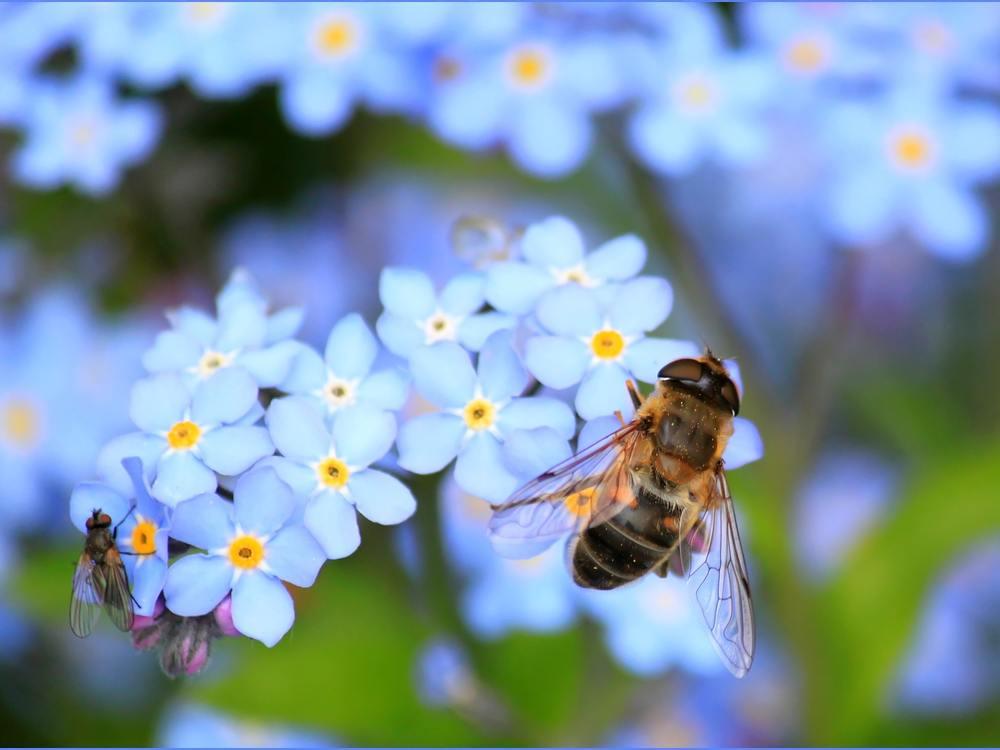 Auf die Bienen gekommen!