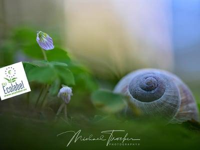 Green lifestyle at Vitalpina Wanderhotel Europa