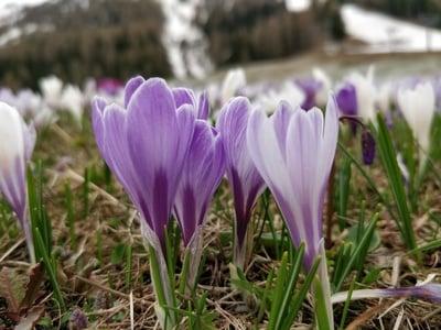 Arriva la primavera