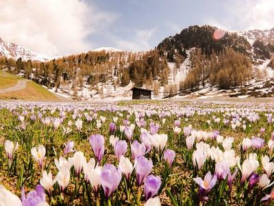 La primavera si risveglia