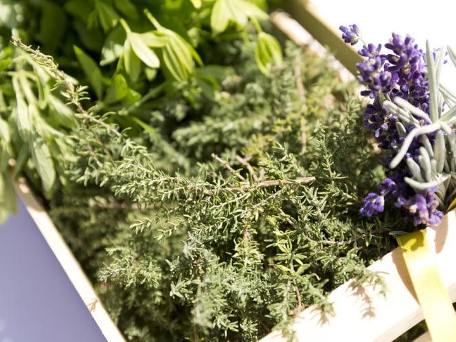 La natura, il più grande orto di erbe aromatiche