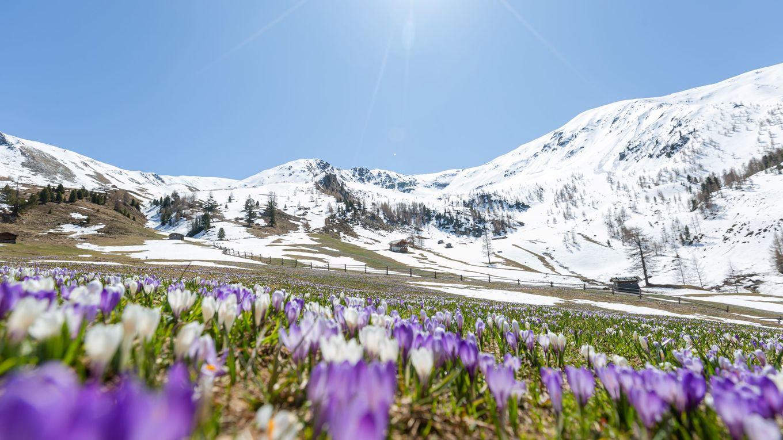 Spring is HOPE