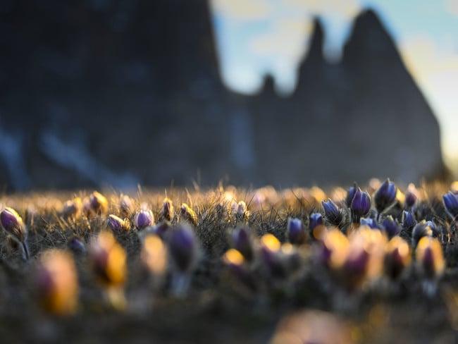Frühlingserwachen auf der Seiser Alm