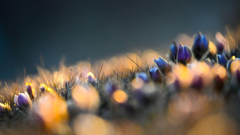 Spring at Alpe di Siusi