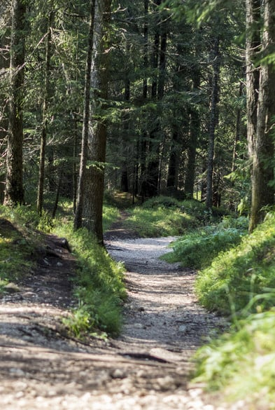 Si può attraversare a piedi nudi il bosco oppure percorrere pascoli disseminati di erbe aromatiche.