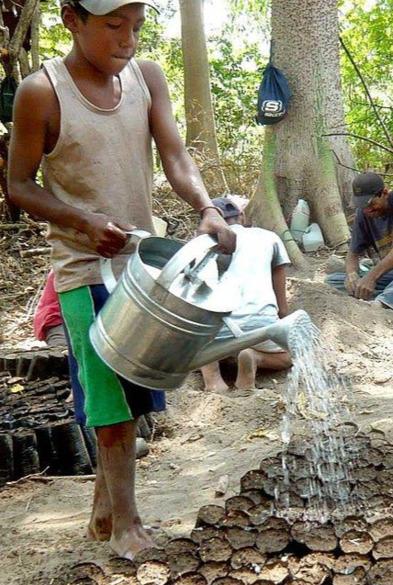 Riforestazione comunitaria, Nicaragua