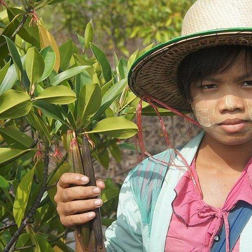 Mangrove reforestation and women's empowerment, Myanmar
