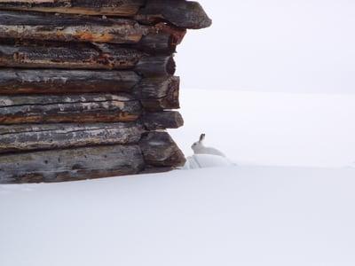Dem Schneehasen auf der Spur...