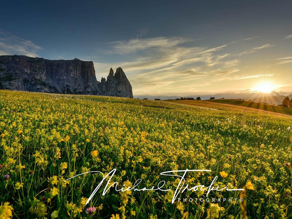 Alpe di Siusi - sea of flowers