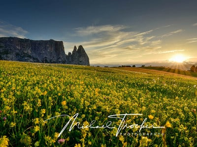 Alpe di Siusi - sea of flowers