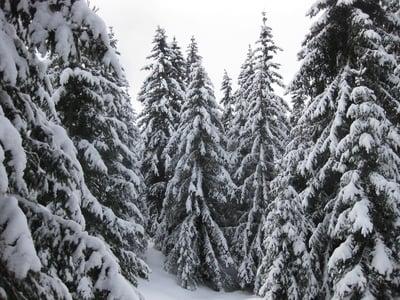 Schneeschuhwanderung auf die Rodenecker Alm