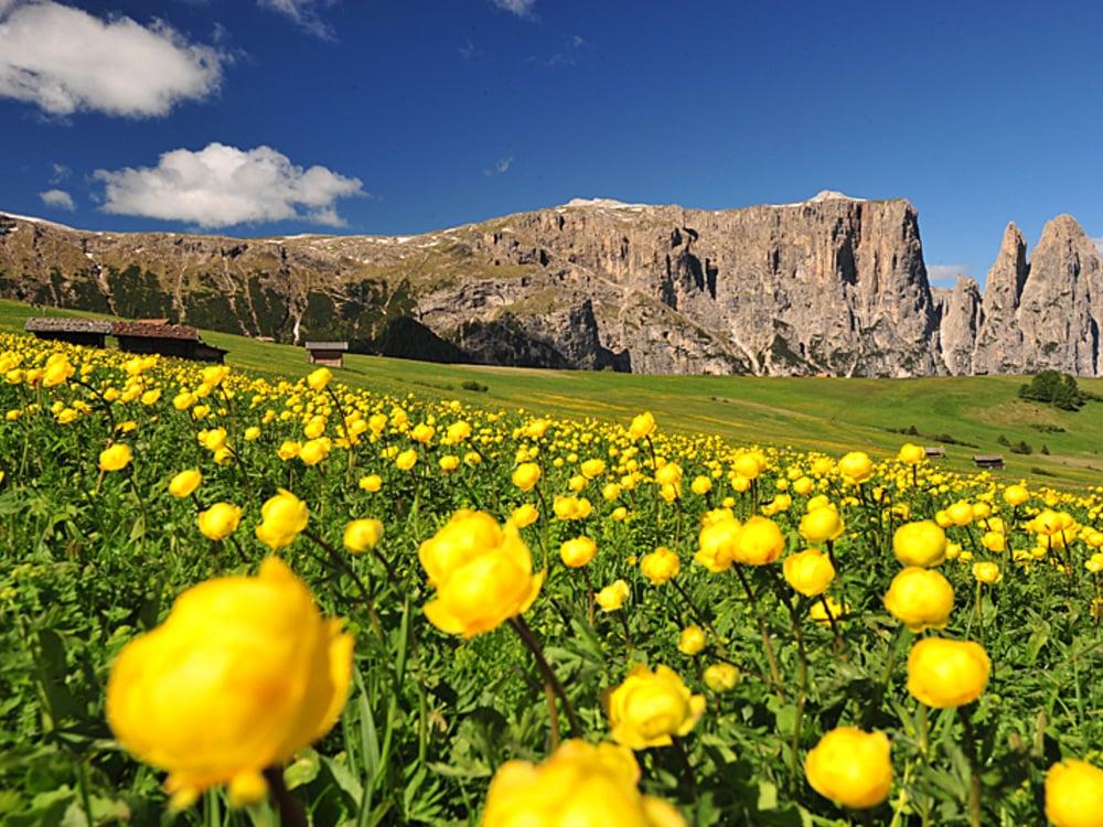 the colourful sea of flowers on the Alpe di Siusi