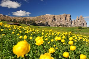 the colourful sea of flowers on the Alpe di Siusi