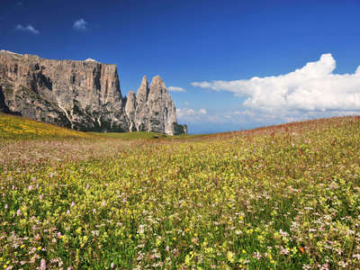 A sea of alpine flowers on Alpe di Siusi