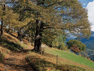 The Keschtnweg Trail