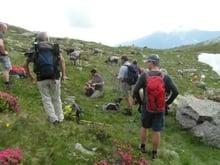 Alpenrosenwanderung