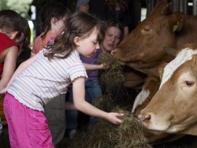 Erleben auf dem Bauernhof