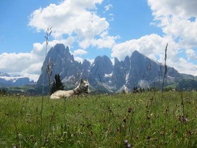 Una brezza di freschezza alpina