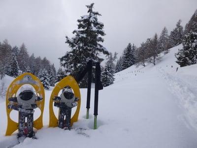 Auf die Rodenecker/Lüsner Alm - Zur Starkenfeldhütte (1.936 m)