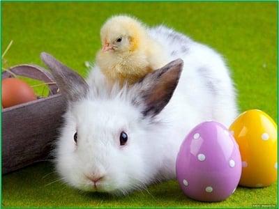 Frohe Ostern wünscht Vitalpina Hotel Cristallo