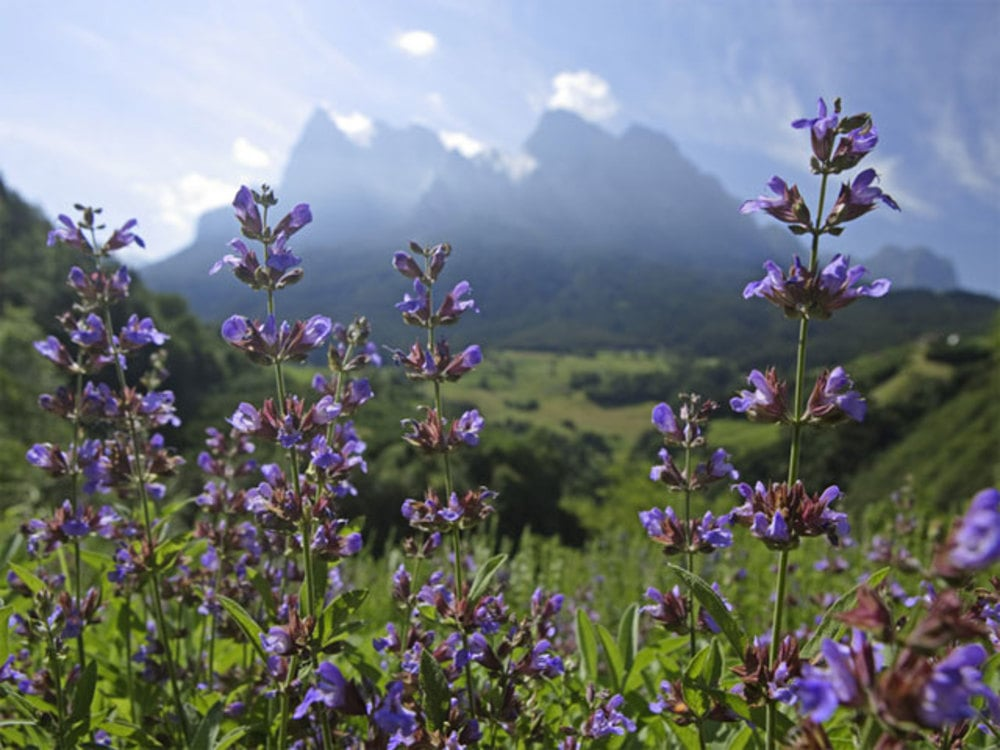 It's Wild Herb Season at South Tyrol Vitalpina Hotels